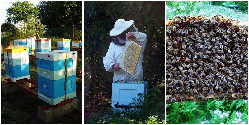 Ajeden produkty pszczele